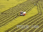 Hau Giang, RoK firms work to promote high-tech agriculture