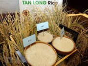 Vietnam's rice exports hit 5.2 million tonnes in ten months