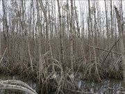 Experts raise concerns over draining of wetlands