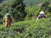 Vietnam targets effective ODA use, management