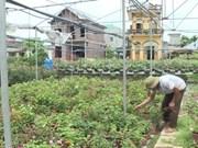 Ninh Binh province's farms go high-tech