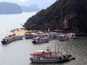 Ha Long city to inspect operations of tourist boats