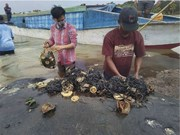 Dead sperm whale in Indonesia found with 6kg of plastic in its stomach