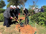Japanese cherry trees planted in Da Lat city