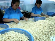 Vietnam needs to restructure cashew production
