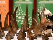 Conservation organisations urge more penalties for wildlife crime