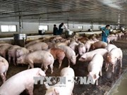 Ministry takes steps to prevent entry of African Swine Flu