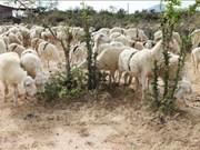 Ninh Thuan promotes farm produce through tourism