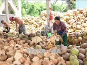 Delta provinces help farmers improve coconut value