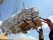 Rice export shows positive signals