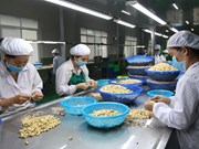 "Processors gain right to label ""Binh Phuoc"" cashew products"