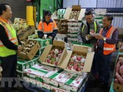 Vietnam promotes farm produce exports to China via official channels
