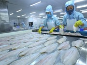 Tra fish exports surge to set new record