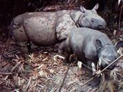 Indonesia tsunami sparks fears of Javan rhino endangerment