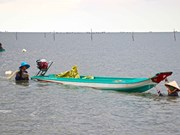 Fishermen in Ca Mau help authorities regenerate marine resources