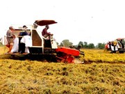 WB-funded project improves rice production in Kien Giang