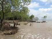 Tien Giang strives to protect coastal forests from erosion