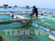 Aquaculture sector looks to sustainable development