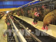 European poultry quality campaign in Vietnam reviewed