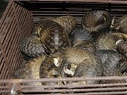 Illegal wild animal trading ring busted in Ha Tinh province