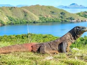 Indonesia to temporarily close Komodo Island