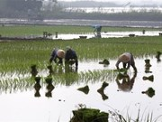 Under half of northern, midland paddy fields have enough water for new crops