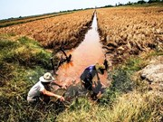 Saline intrusion threatens Mekong Delta