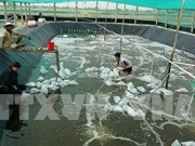 Master plan needed to develop shrimp farming