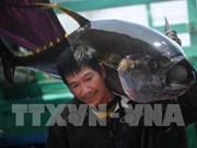 Tuna exports predicted to flourish in 2019