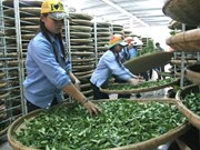 Vietnam's tea exports down in both volume and value