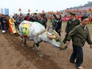 Painting contest held for buffaloes joining ploughing festival