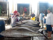 Fishermen in central region enjoy bumper catches during Tet