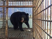 Thousands of Hanoians call for end to bear farming