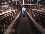 Plan seeks to minimise social, economic impact of bird flu