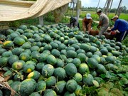 Vietnam's watermelons face tougher regulations from China