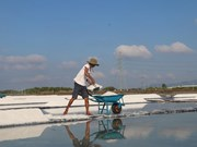 Salt farmers in Ba Ria-Vung Tau rejoice as sun beats down