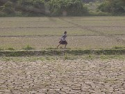 FAO assists Myanmar to improve food security