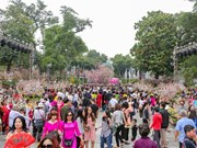 Japanese cherry blossom festival brings global wonders to Hanoi