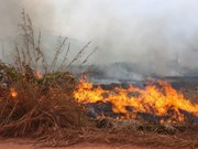 Thailand, Laos launch forest fire prevention campaign