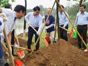 Additional 1,000 cherry blossom trees planted in Hanoi park