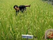 Indonesia's agriculture makes significant contribution to GDP