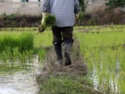 Thailand: rice bill expected to be approved