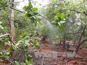 Dutch company eyes 5,000 ha of clean cashew land in Binh Phuoc