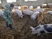 Trade ministry ensures pork supply despite African swine fever