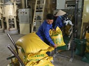 Rice firms face bankruptcy amid trade difficulties
