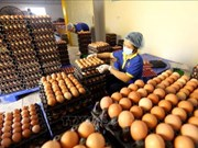 Vietnamese, Japanese companies ink raw egg distribution deal