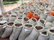 Singapore seizes nearly 13 tonnes of pangolin scales