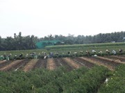 Southern region plans to grow other crops on low-yield rice fields