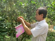 Dong Thap's farmers encouraged to apply GAP standards for fruit growing