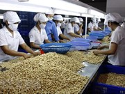 Cashew processors face difficulties with raw material imports